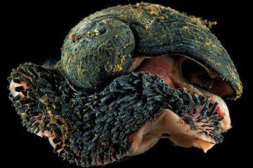 Crédito da foto: http://morethanadodo.com/2015/04/28/the-iron-snail/