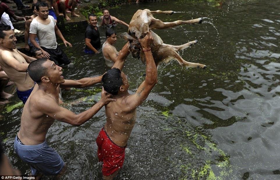 Festival Deopokhari, o sacrifício vivo aos deuses