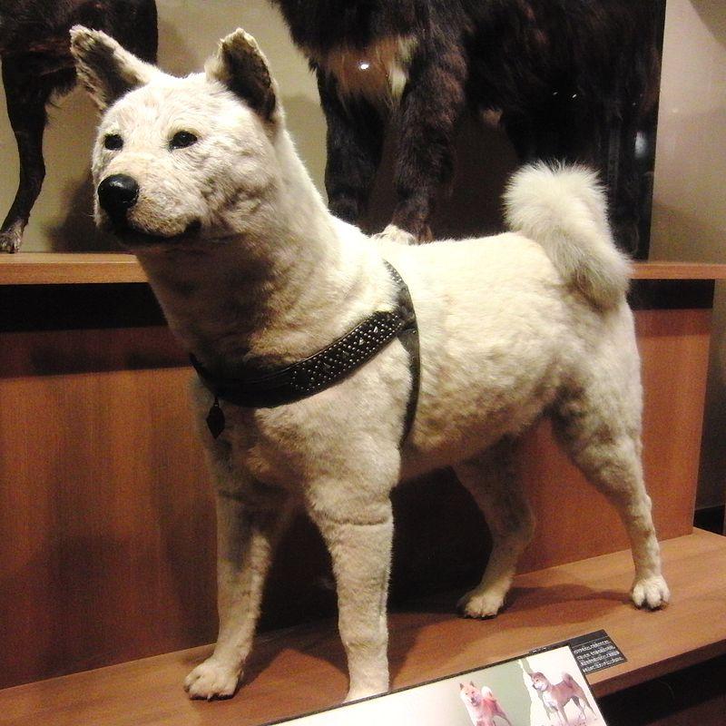 Hachiko-004