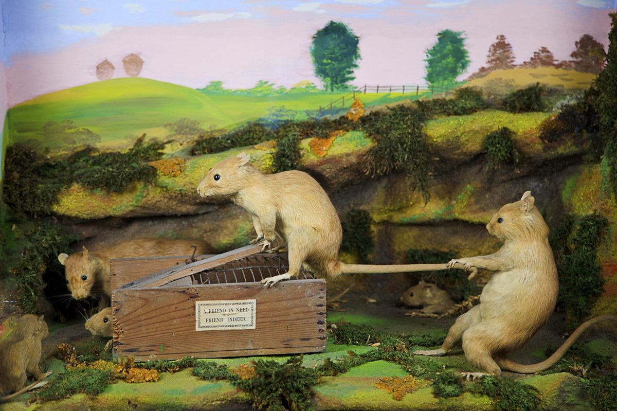 Walter-Potters-Curious-World-of-Taxidermy_006