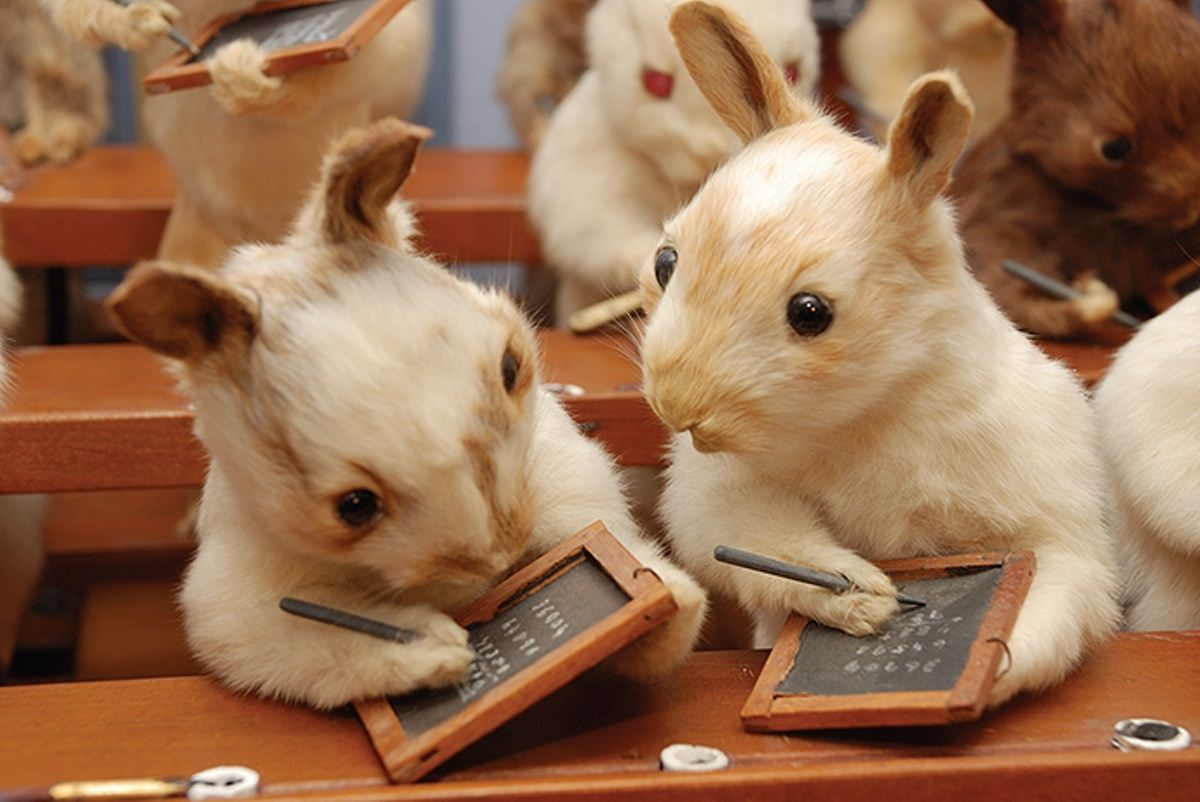Walter-Potters-Curious-World-of-Taxidermy_015