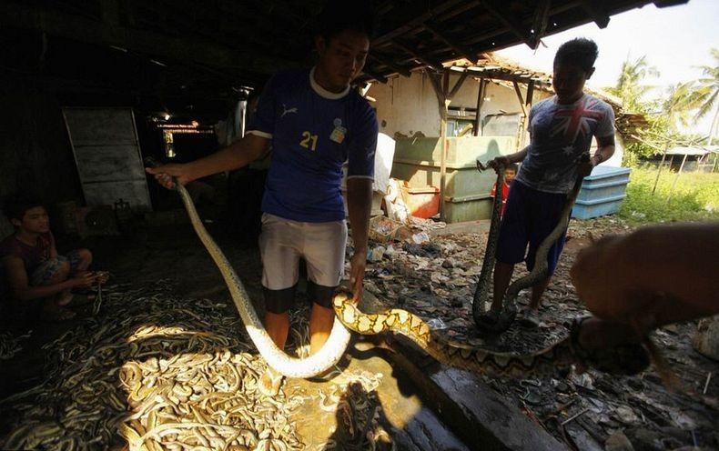 matadouro-cobras-indonesia_003