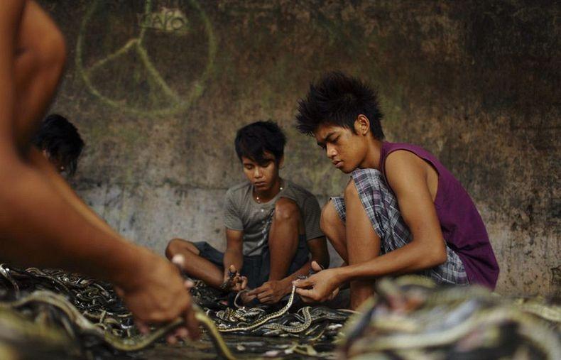 matadouro-cobras-indonesia_006