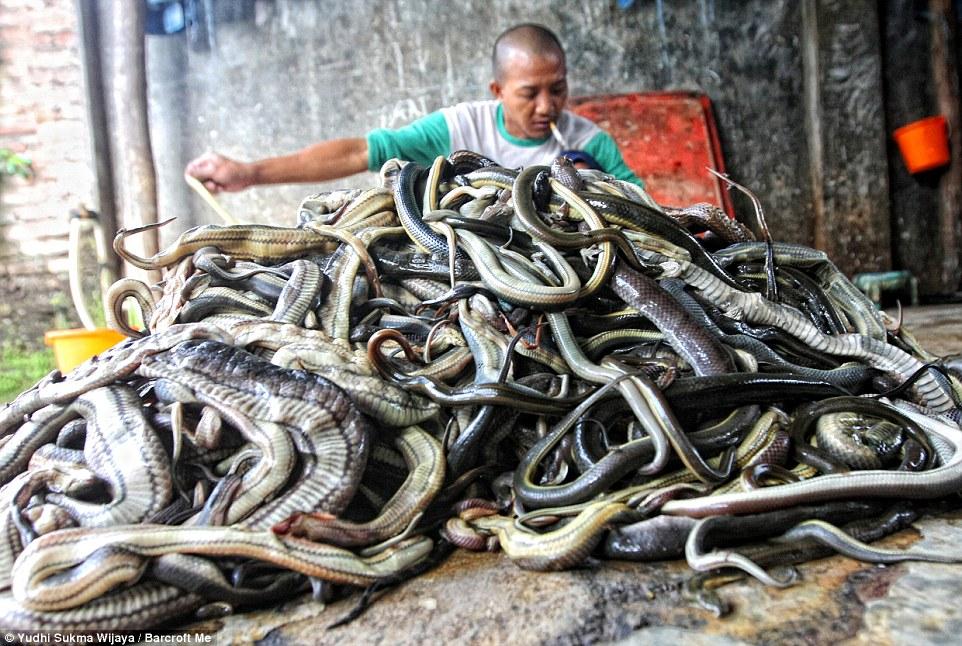 matadouro-cobras-indonesia_006a