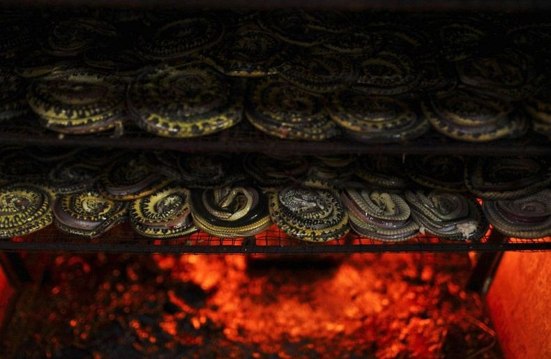 matadouro-cobras-indonesia_009