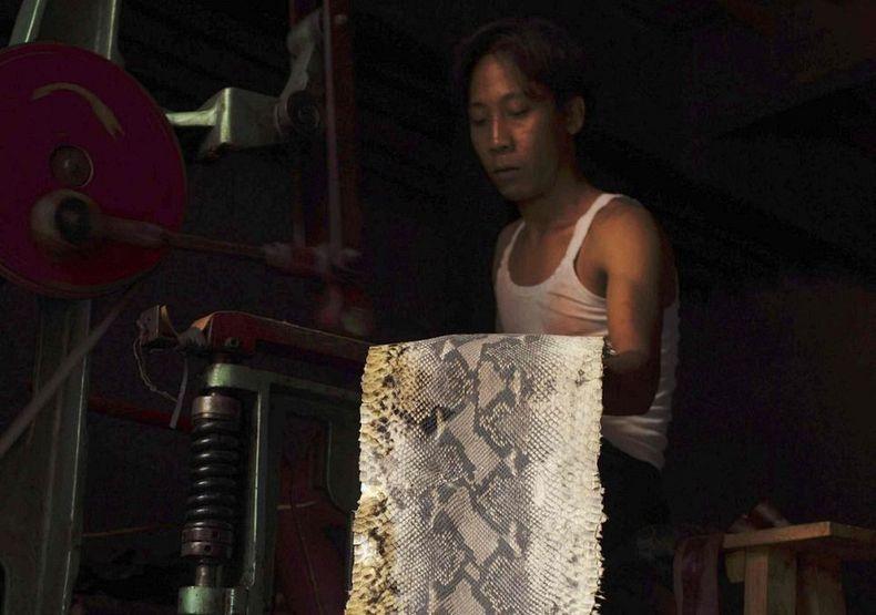 matadouro-cobras-indonesia_012