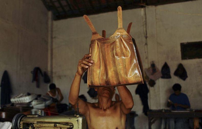 matadouro-cobras-indonesia_014