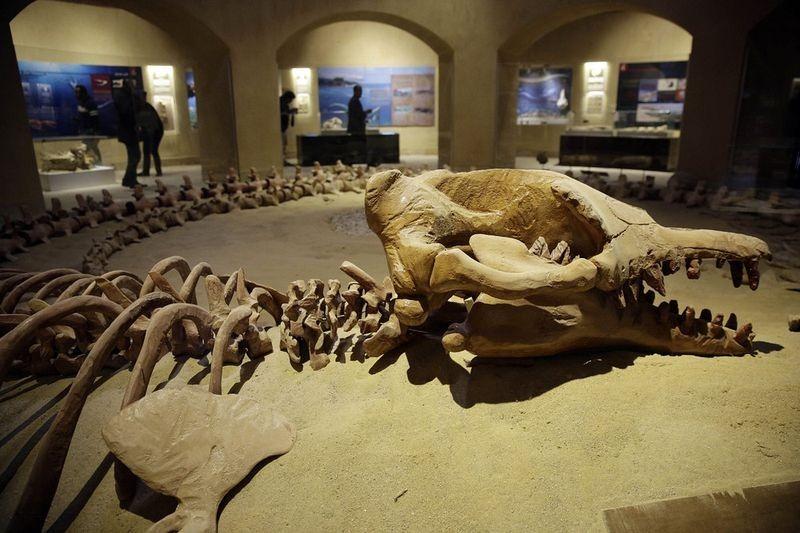 museu-vale-das-baleias_003