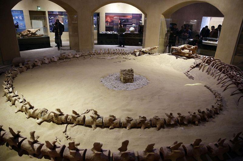 museu-vale-das-baleias_004