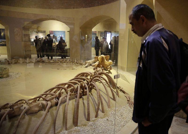 museu-vale-das-baleias_005