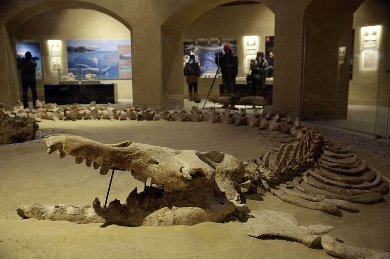 museu-vale-das-baleias_006