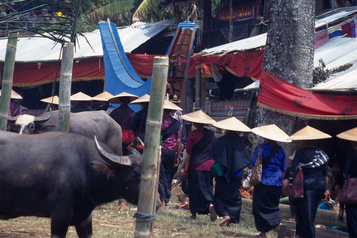 Mulheres convidadas em procissão, seguindo o caixão, aonde irão realizar o sacrifício de búfalos.
