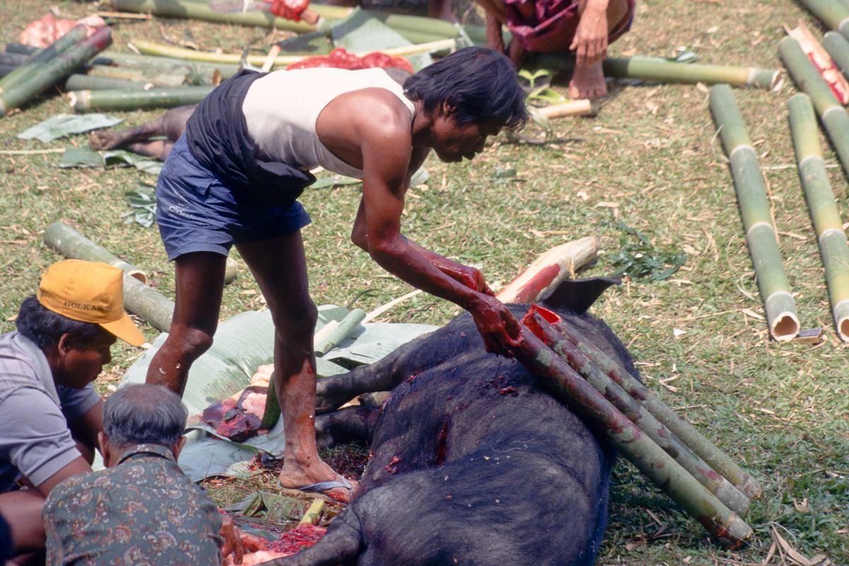 Bambus são recheados de carne, gordura e sangue