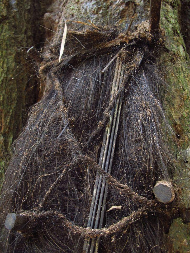O túmulo de um bebê e que são considerados sagrados pelos toradjas