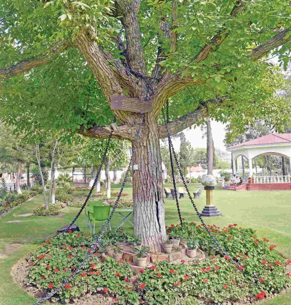 A árvore que foi presa no Paquistão