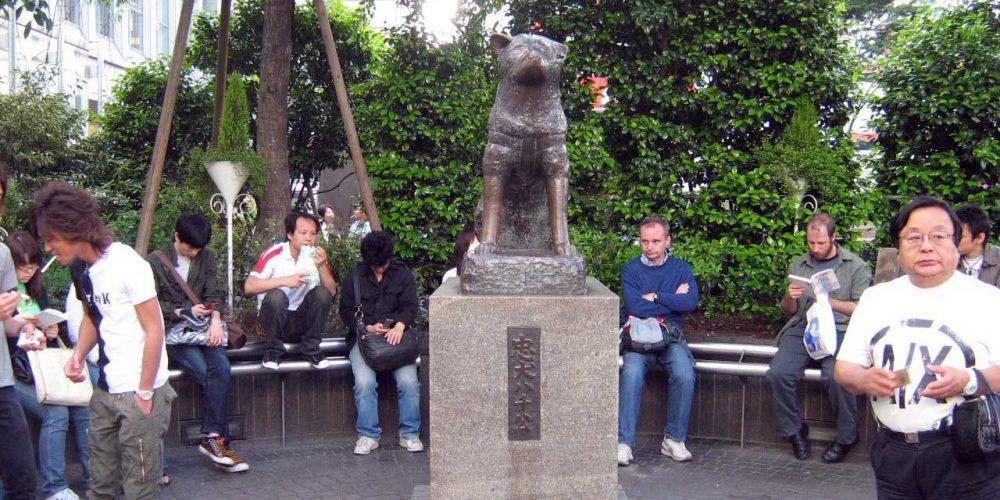 Hachikō, um cão mais que fiel