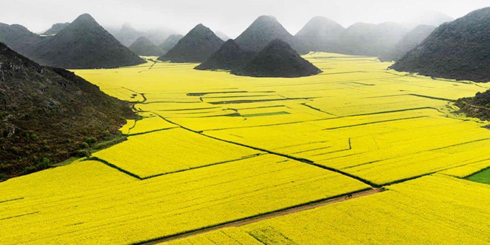 Os campos de canola em Luoping, China
