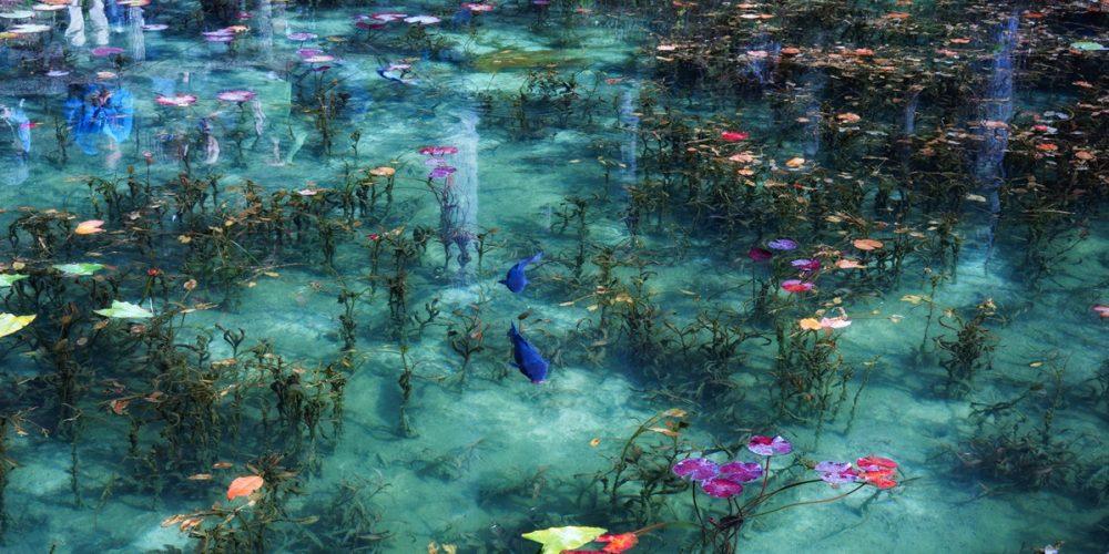 Lago de Monet, a lagoa onde a arte ganha vida