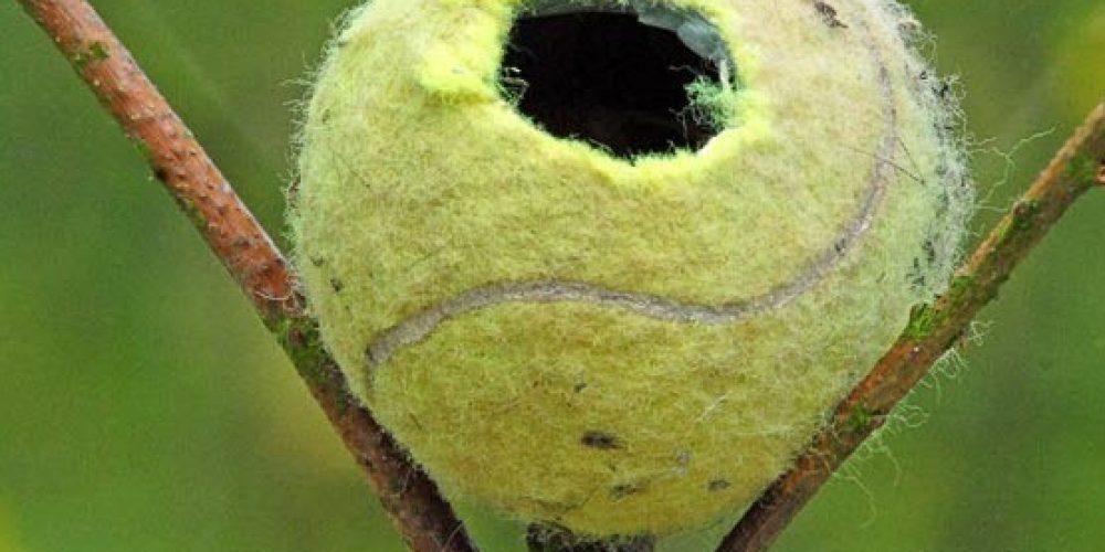 Uma bola de tênis como lar