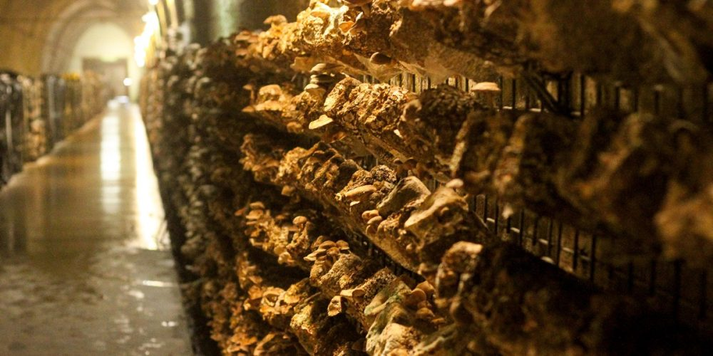 O túnel do cogumelo em Mittagong