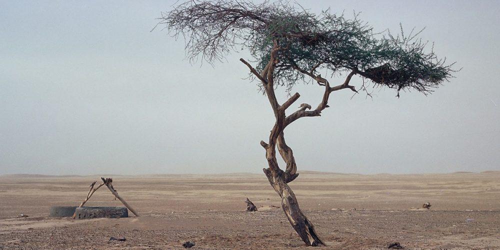 A Árvore de Ténéré, a árvore solitária