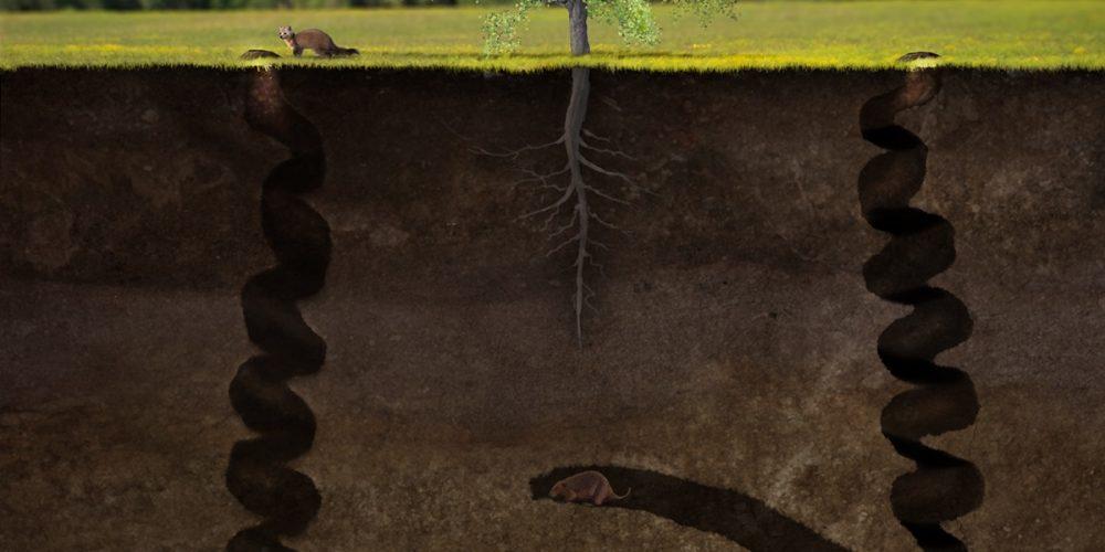 Daemonelix, os saca-rolhas do diabo