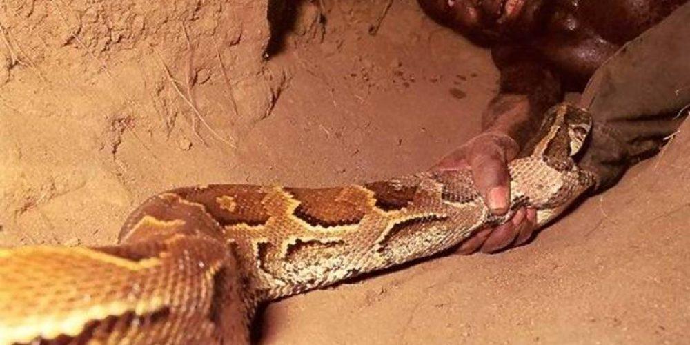 Na toca da serpente