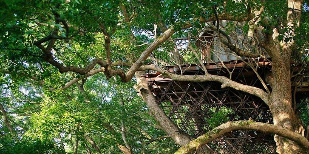 Kusukusu, a senhora casa na árvore