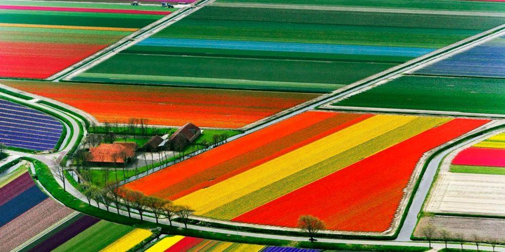 Show de cores das tulipas na Holanda